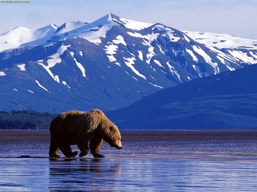 Sales and Service Alaska